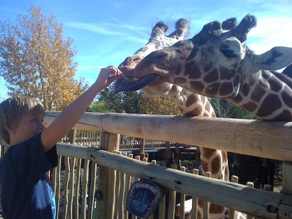 Colorado Springs Events Cheyenne Mountain Zoo