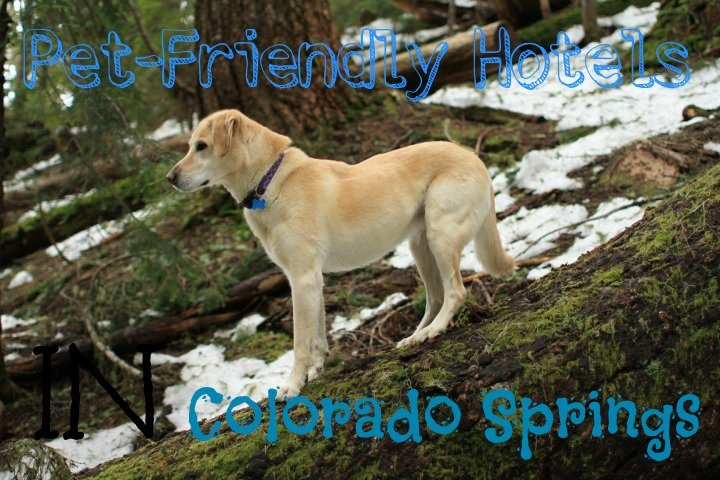 pet friendly hotels in Colorado Springs
