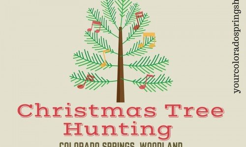 Regional Christmas Tree Program [cut your own]