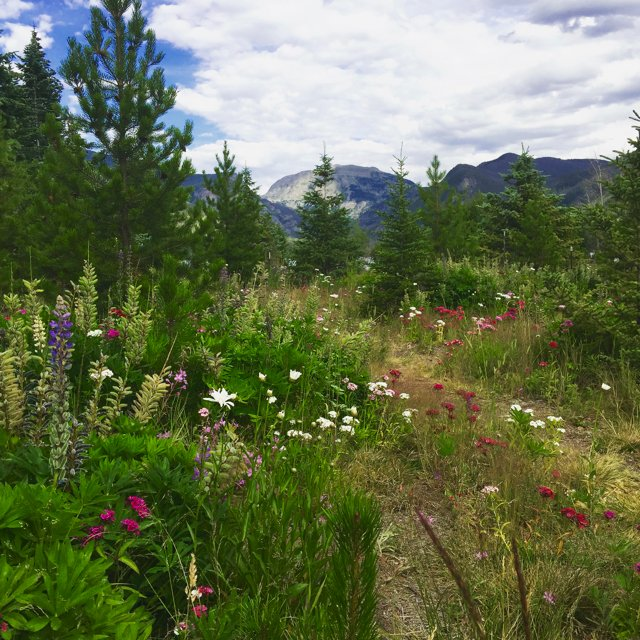 Mountain flowers at grand lake colorado springs real mountain flowers at grand lake mightylinksfo