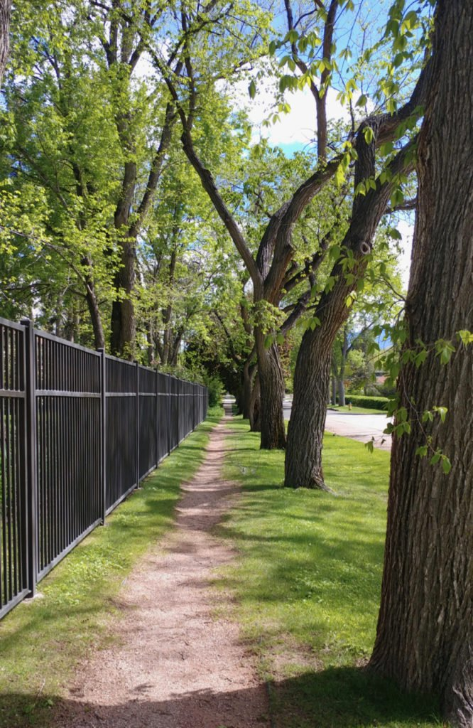 Tree lined street with walking path and black metal fence