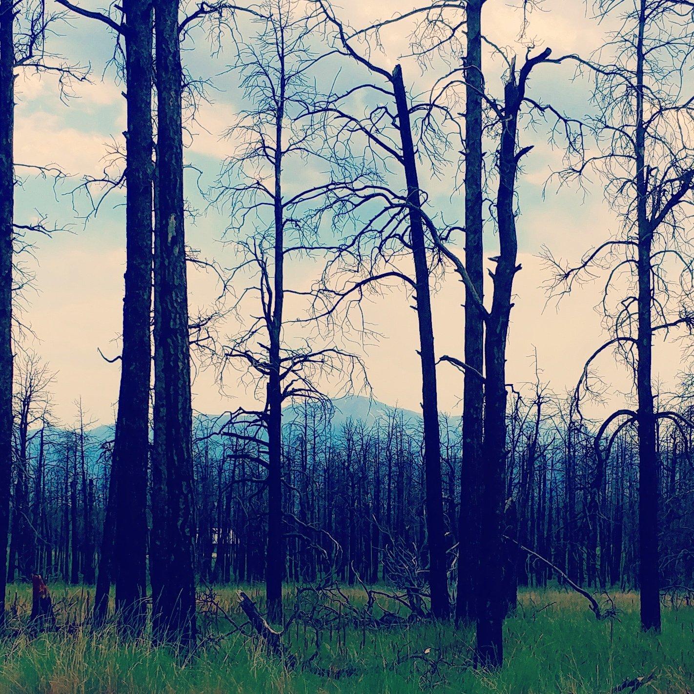 Pikes Peak as seen through the Black Forest burn scar